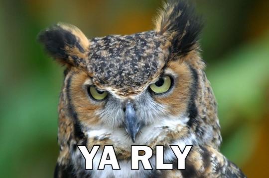 owl ya rly