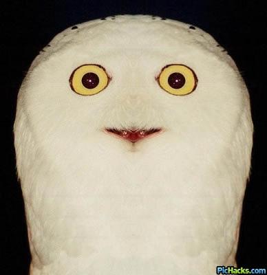 owl o rly mutant