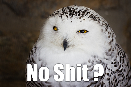 no shit owl