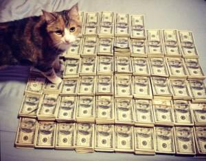 cat-bandz-1024x804